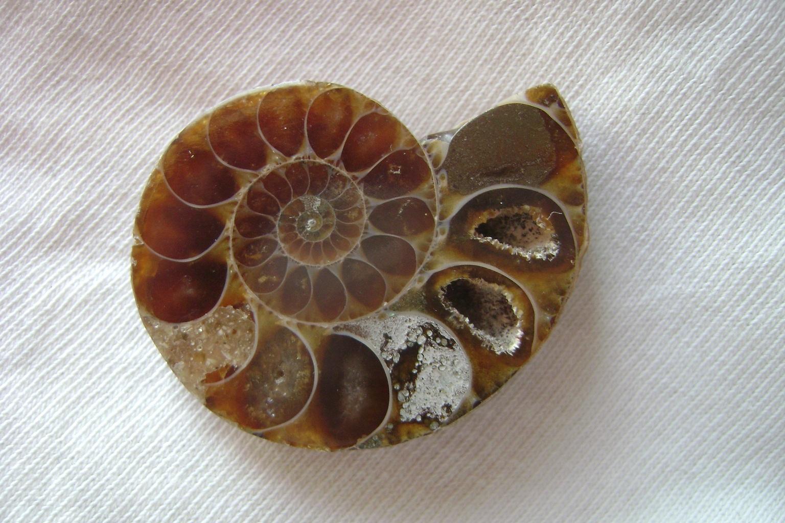 Kristal_Amonit_fosil__1.JPG