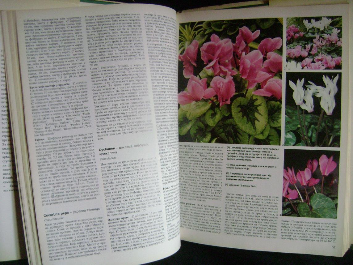 Enciklopedija_bastenskog_bilja_3.JPG