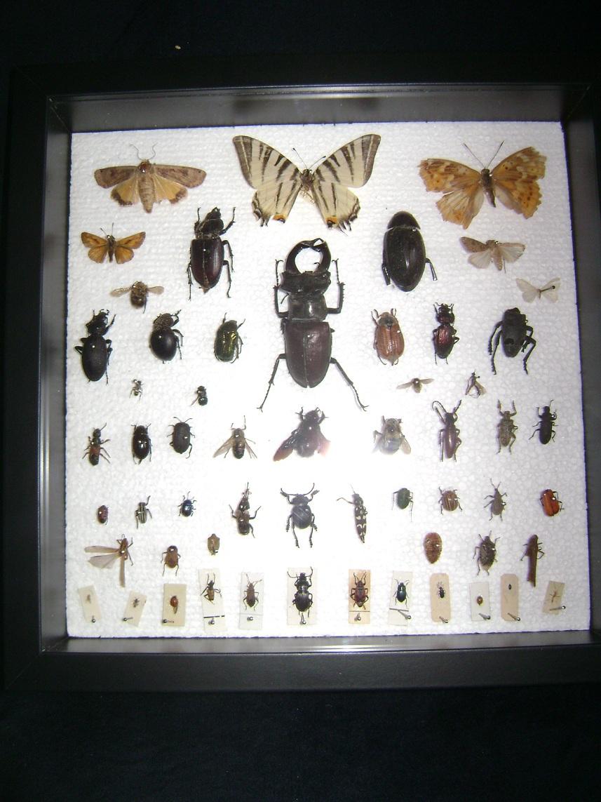 Insektarijum_1__1.JPG