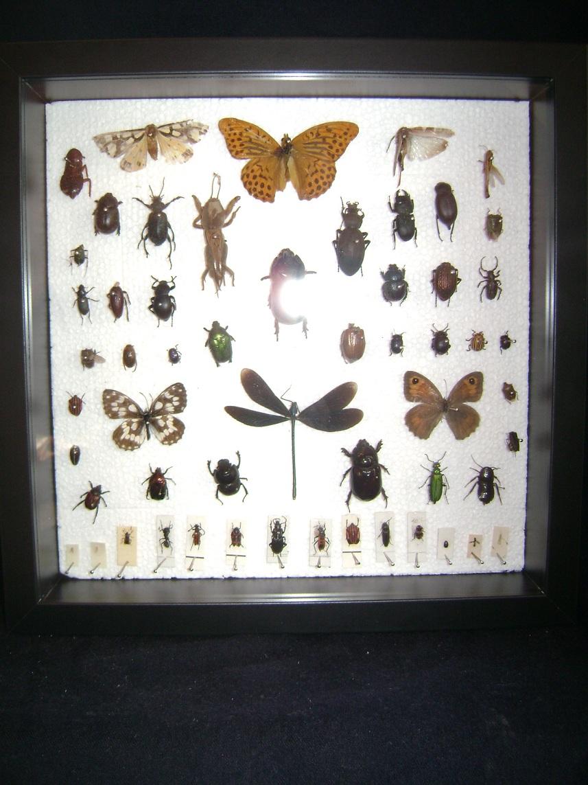 Insektarijum_2__1.JPG