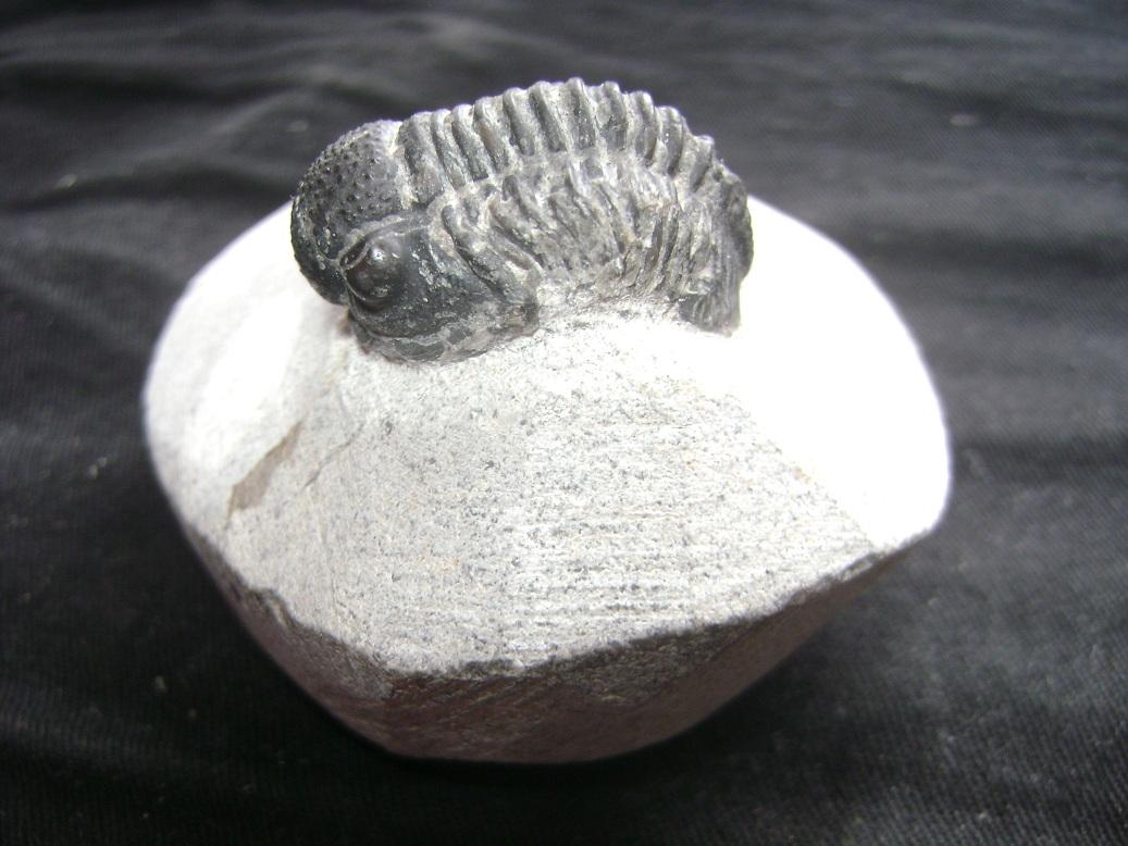 Fosil_Trilobit__1.JPG